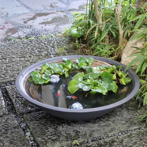 Water Bowl Garden Fish Pond Container Water Gardens Water Garden Indoor Water Garden