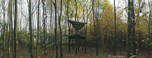 Surprisingly beautiful structure in the forest