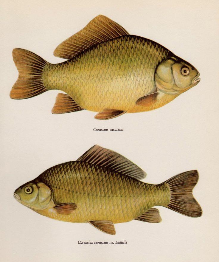 Картинки про рыб из сказок может