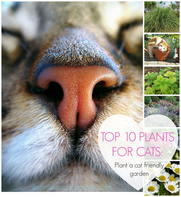TOP 10 PLANTS FOR CATS - PLANT A CAT FRIENDLY GARDEN FOR YOUR MOGGIE