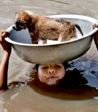 Flood_hang tight puppy, I am here.: Puppies, Dogs, Faith In Human, Funny Pictures, Help Other, Pet, Human Restoration, Photo, Animal