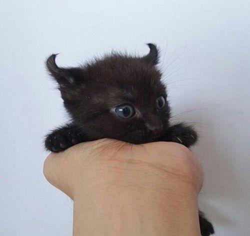 Und diese ganz besondere Kreatur.   Einfach nur 19 Bilder von Katzen, die drolliger nicht sein könnten