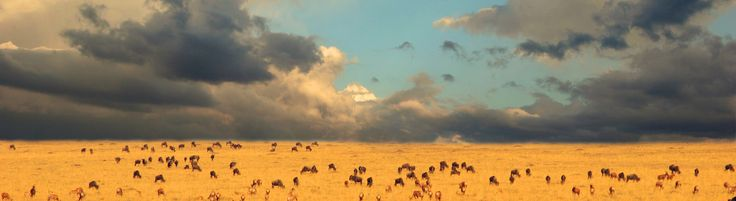 Expansive Serengeti - www.amazetravel.com