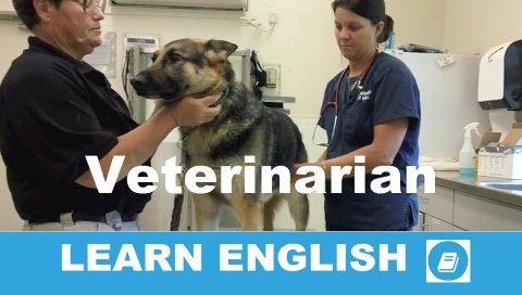 Angol középfokú nyelvvizsga gyakorló feladat megoldással. Hallott szöveg értése teszt. Válaszolj angolul az állatorvosról szóló szöveggel kapcsolatos kérdésekre.