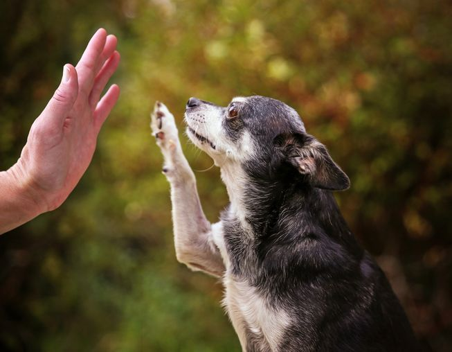 Teaching an old dog new tricks—you can do it!