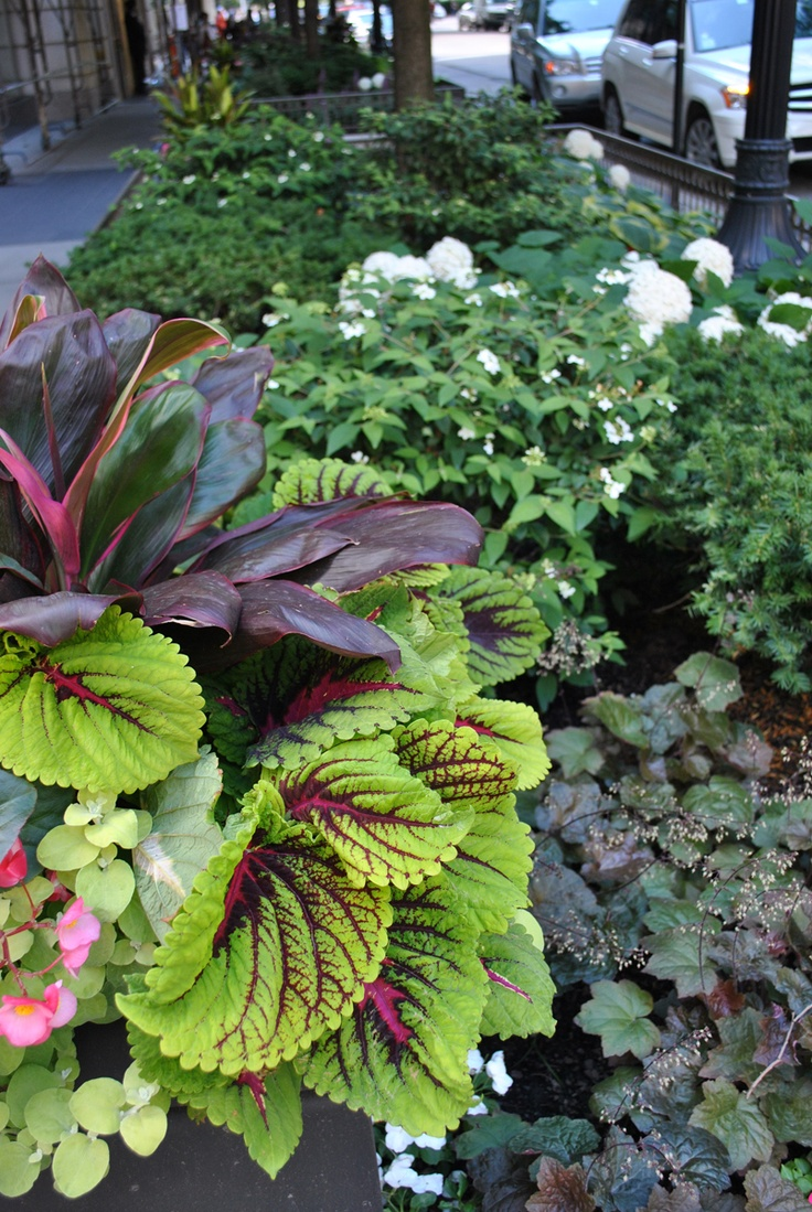 13 Best TOPIARIUS Fine Gardening Images On Pinterest