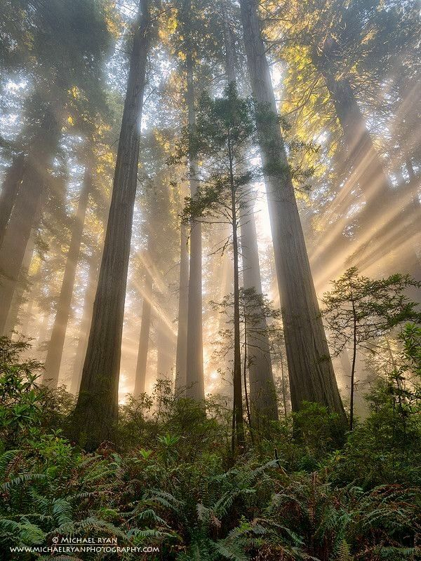 Forest light. That's what I need right now