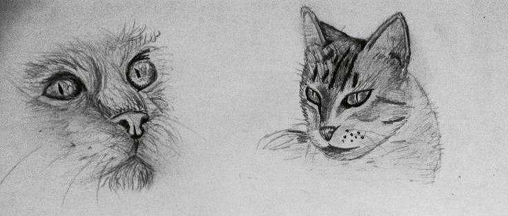 Some cats drawing | Rareș Neagu on Patreon