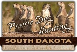 Information about prairie dog hunting in South Dakota. Includes directory of prairie dog outfitters and guides in SD.