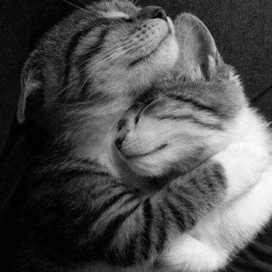 The Best Cat Hug Ideas On Pinterest Cat Love So Nice And Hug - 25 heartwarming moments animals hugging