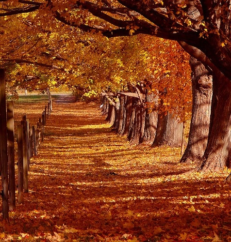 country roads... mcbabblePaths, Country Roads, Diet, Autumn Leaves, Farms, Beautiful, Fall, Favorite Seasons, November Wedding