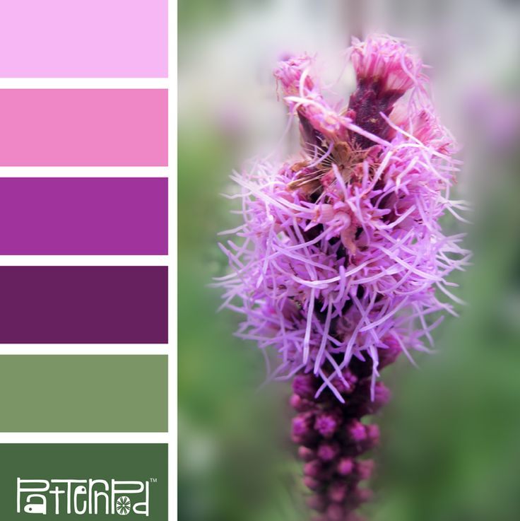 Color Palette: Green, Purple, Pink.  If you like our color inspiration sign up for our monthly trend letter - click the image for the link.