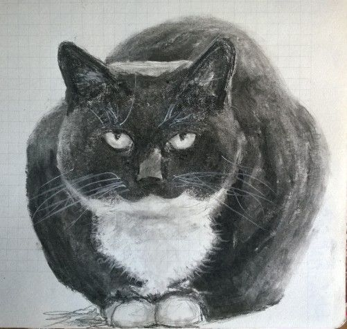 Charcoal sketch of cat (Mr Margit)