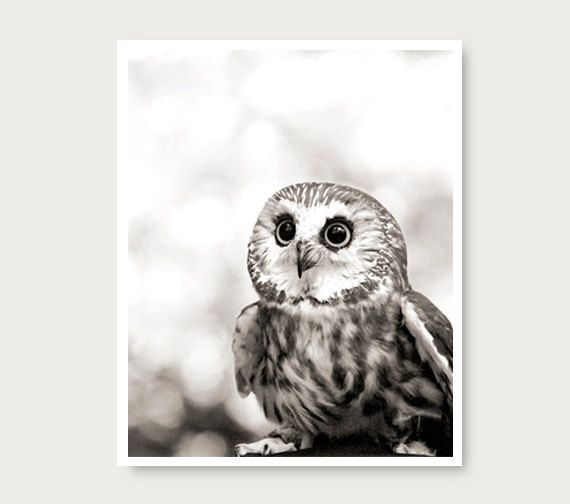 Hey, I found this really awesome Etsy listing at https://www.etsy.com/listing/121966551/cute-owl-photo-owl-print-black-and-white