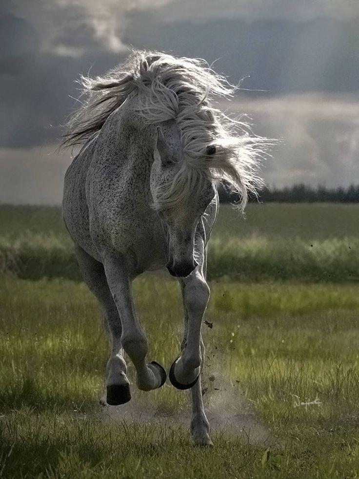Wojtek Kwiatkowski é um fotógrafo polonês que ama cavalos árabes, e tenta em suas fotos capturar sua beleza e sua alma. Ele é certamente o fotógrafo mais conhecido e mais documentado sobre o assunto; autor de livros sobre procriação, adestramento, bem como é juiz e consultor de pedigrees dos cavalos árabes da WAHO(World Arabian Horse …