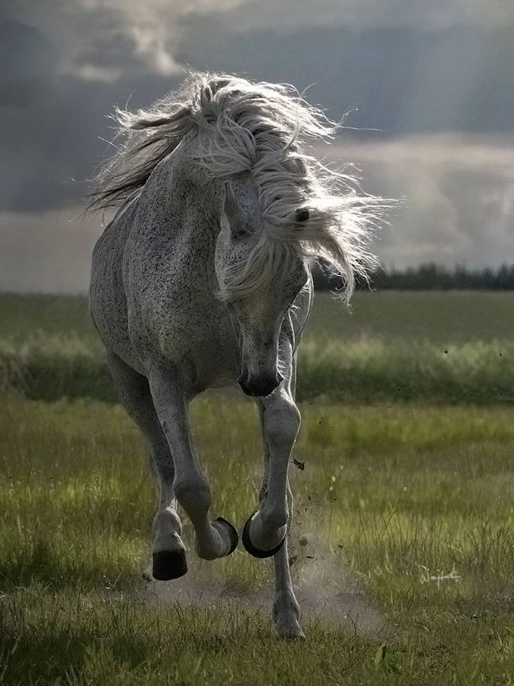 Impressive and Powerful Horses Photos