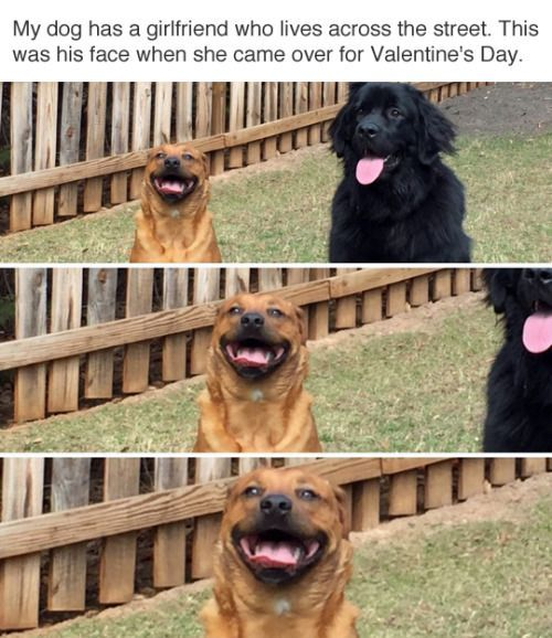 (ᵔᴥᵔ)︵/ WHO LET THE DOGS OUT (ᵔᴥᵔ)︵/ ~ How sweet is this face?! He was so excited to have his Valentine over!