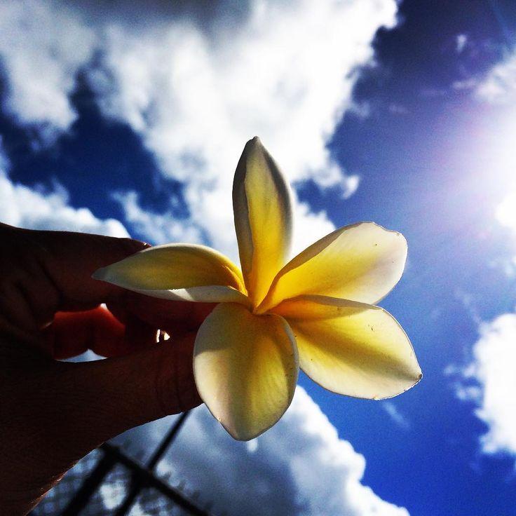 プルメリア。フランジパニ。 またの名をテンプルツリーとも言います。ハワイ、青空、夏といえば、の花。  香りはね、ほんのり優しい香り。アロマセラピーのエッセンシャルオイルもあるのですが、かなり高い精油のひとつ。 でもやっぱり海やリゾート、夏のアロマブレンドに使いたくなる香りなのです。  #aroma #purumeria #flowers #sky  #aromalabo #aromablend #f4f #essencialoil #haliewa