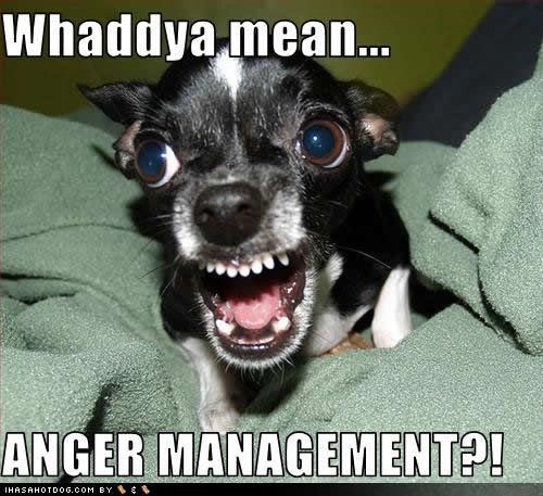 HahahaCoffe, Chihuahuas, Quote, Funny Stuff, Dogs Pictures, Anger Management, Funnystuff, Little Dogs, Animal