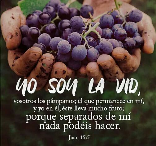 Juan 15:5 Yo soy la vid, vosotros los pámpanos; el que permanece en mí, y yo en él, éste lleva mucho fruto; porque separados de mí nada podéis hacer.♔