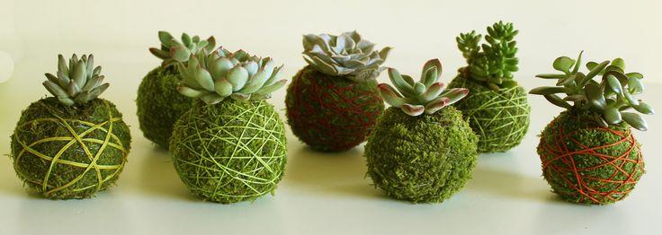 #Kokedama #Succulents