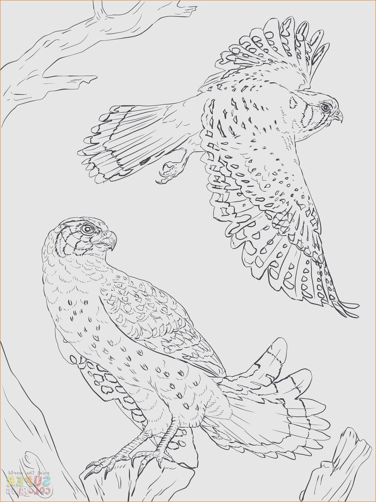 Jaguar Coloring Pages Coloring Pages Jaguar Coloring Pages