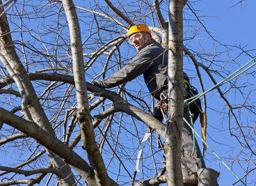 Tree Lopping in the Capalaba and Alexandra Hills area. Services in the greater Redlands area. http://www.capalabatreeremoval.com/