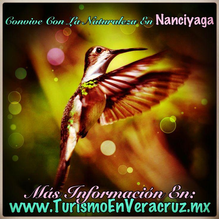 Convive con la #naturaleza en #nanciyaga http://www.turismoenveracruz.mx/hospedaje/nanciyaga/ #Catemaco #Veracruz