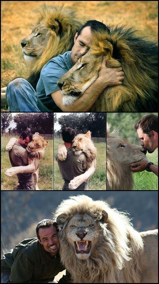 Kevin Richardson...the lion whisperer <3 <3 <3