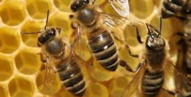 benefits of saliva of bees