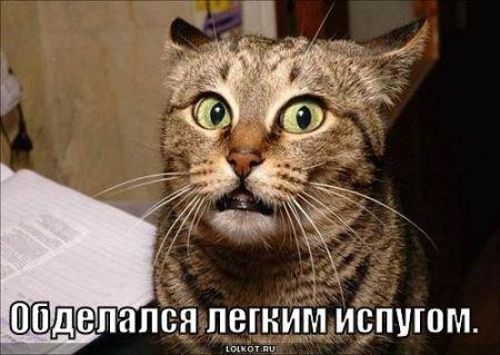 Смешные картинки кошек с надписями