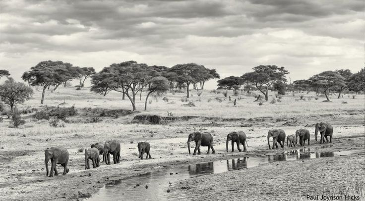 Shooting Africa: Amazing shots by the experts leading our Serengeti Photographic Safari