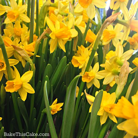 Garden of Yellow Spring Flowers #Daffodils #easterflowers #easterbouquet
