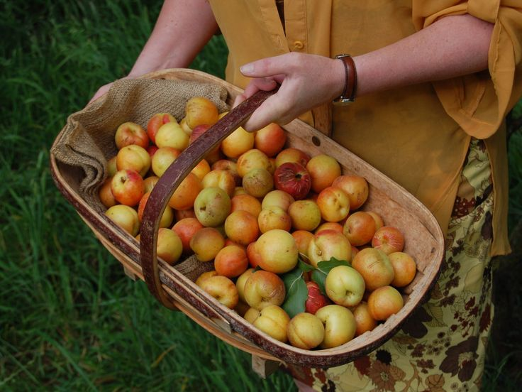 GROW GREAT APRICOTS & 3 GREAT WAYS TO EAT THEM | Country Trading Blog
