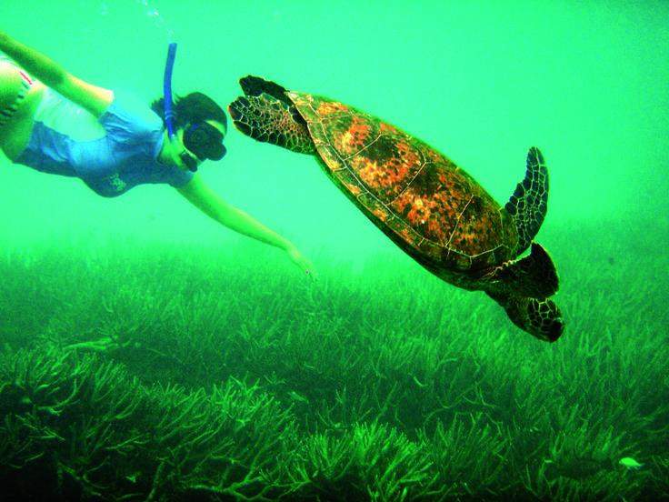 Marine Biology Marine Biology - Fiji Snorkeling - Ocean Futures - marine biologist job description