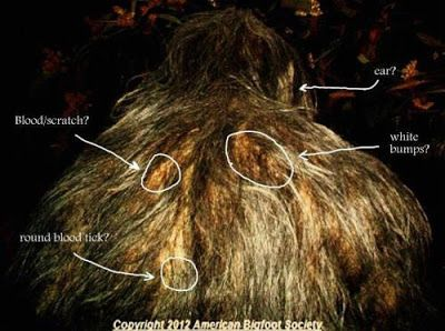 Bigfoot Evidence: Robert Lindsay's Breakdown Of Melissa Hovey's Bigfoot Photo