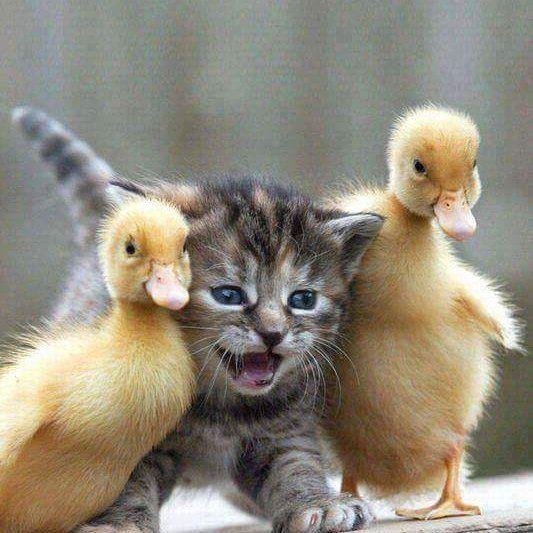 Diga X!  #filhotes #kitty #kitten #gateirasposseresponsavel #gatos #gateiras #gatos #cats #canaldogato #gatinhos #petlover #adoteumronron #decoracao #força #amor #love #familia