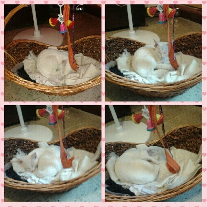 KITTY nap #Cats #Cat #Agatha