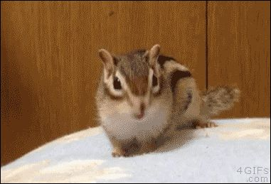 Chipmunk Getting Comfy
