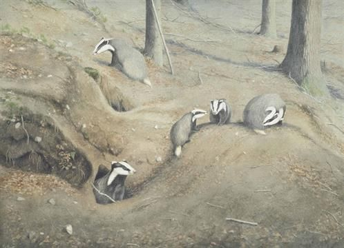 Peter Barrett (b. 1935) Three illustrations of a Badger Set ...