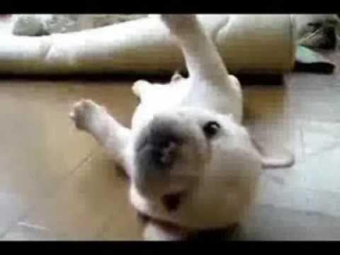 Video divertenti!!!!!!!!!! Il cane più scemo del mondo - Guardalo