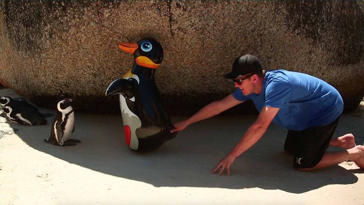 cool Penguin Friends in South Africa
