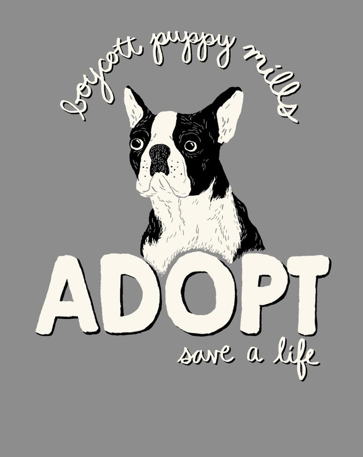 adopt...you will make the world a better place <3  <3  <3