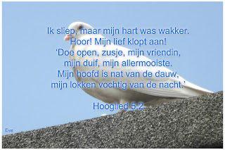 Good Morning Girls NEDERLAND: Hooglied 5