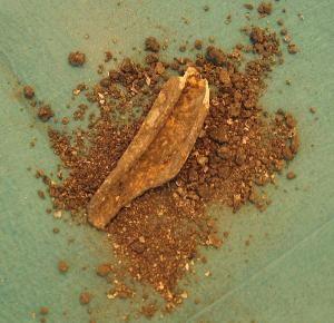ano ang cro magnon Este hombre de cro-magnon muestra el t pico cuerpo fornido de las poblaciones humanas del paleol tico superior tard olleva un colmillo de mamut, que usaban para hacer refugios.