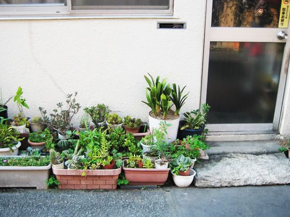 Little potted city garden in Toyko