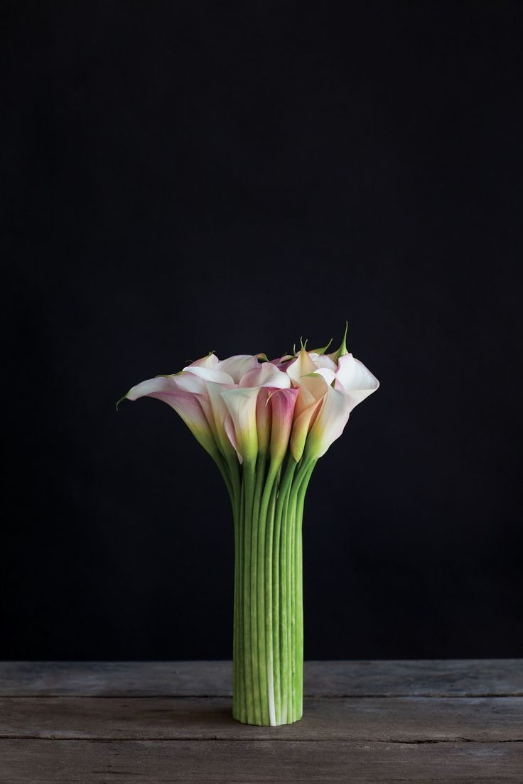 The best images about flowers on pinterest