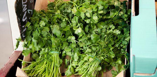 Bama - Grønnsaker - Urter - Koriander