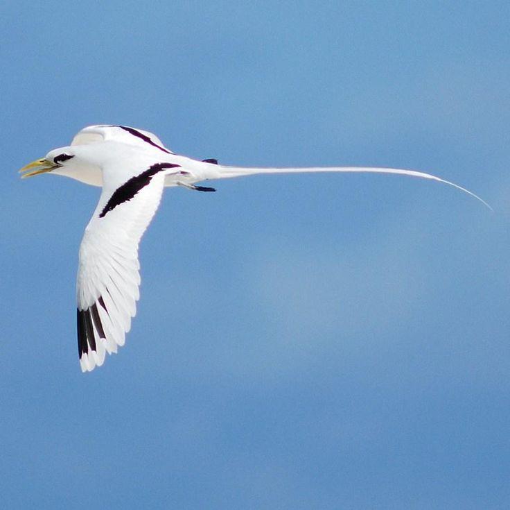 oiseau vert espece endemique de l ile la reunion -