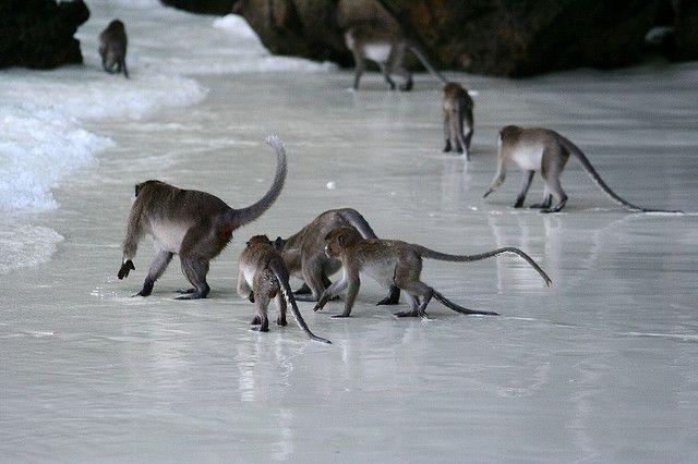 Monkey Island - Phi Phi, Thailand by mandimike, via Flickr
